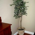 silk plant